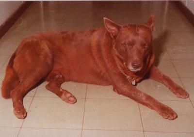 red-dog-01