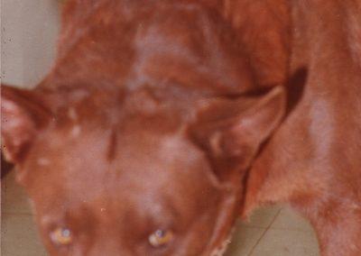 red-dog-08