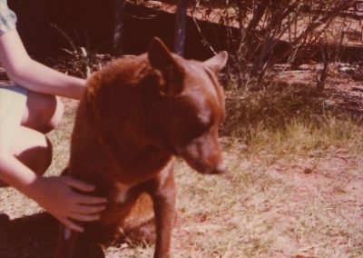 red-dog-09